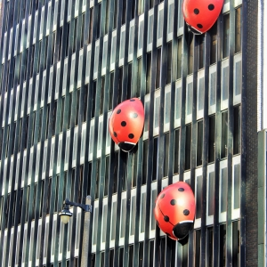 Lady Bug Building